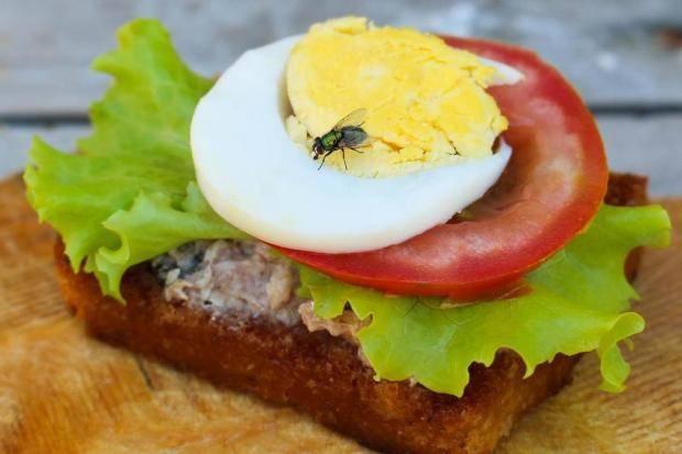 Gıda Sektöründe Entegre Zararlı Mücadelesinin Yeri