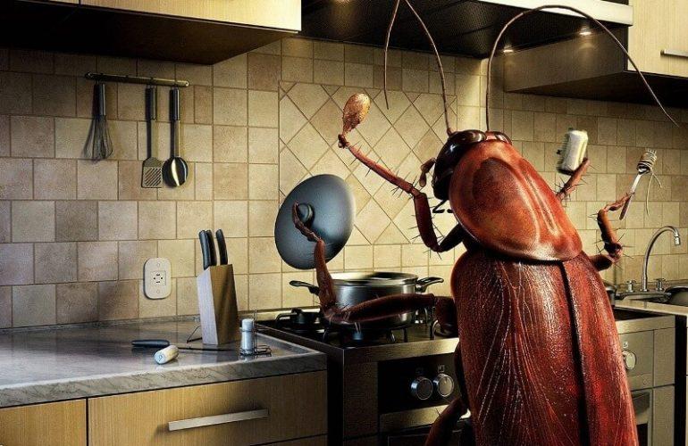 Mutfağımda Kalorifer (Hamam) Böceği Gördüm