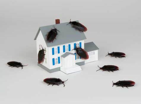 Pest (Zararlı) Ne Demektir? İşletmemde, Evimde Hiçbir Canlı İstemiyorum!
